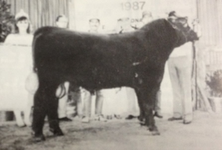 Photo of B. R. Replay's full brother Pinpur Classic